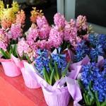 Flowers & Plants Pic 1