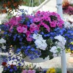 Flowers & Plants Pic 4