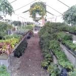 Flowers & Plants pic 3