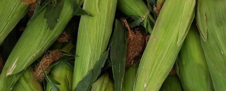 Fresh Local Sweet Corn.  Available by the ear, dozen, or even larger quantities.
