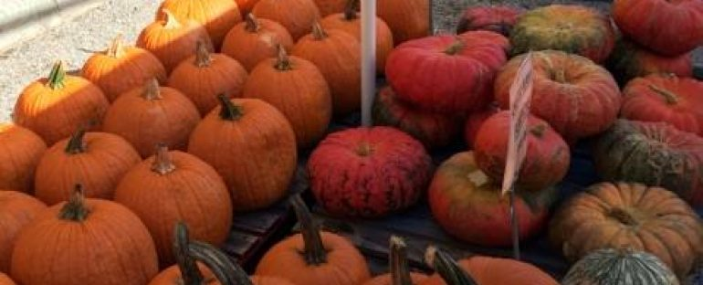 Pumpkins, Gourds, Indian Corn, Corn Stalks, Straw Bales and More